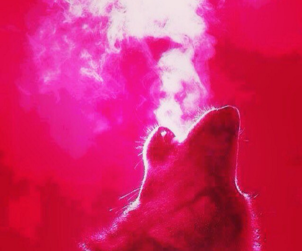 Red Wolf Howling cold breath